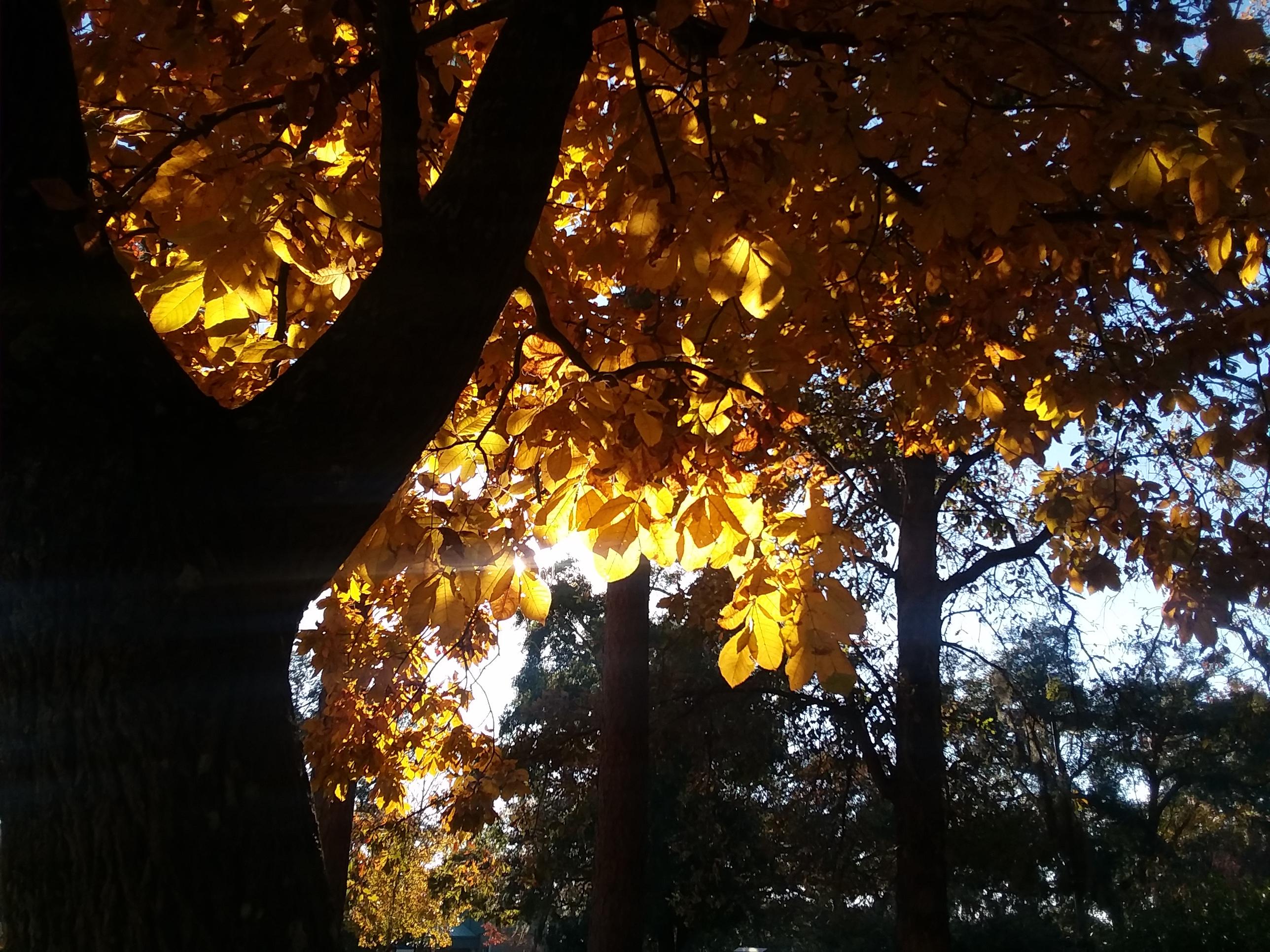 Shaded autumn sun