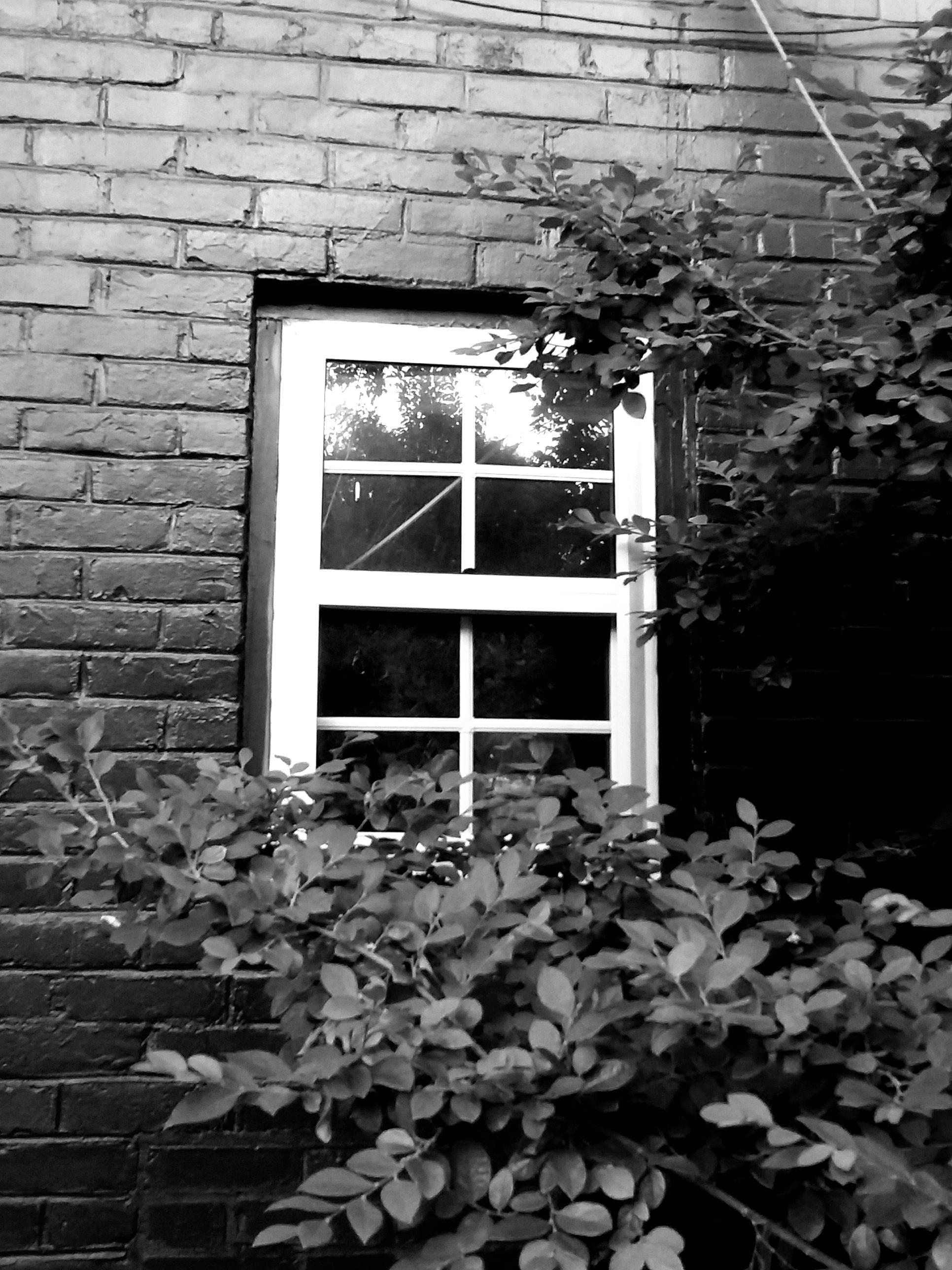 Storm window